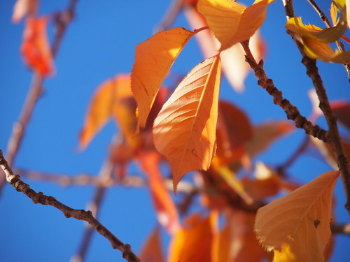 Gold and blue, Autumn 2010 | by gf231