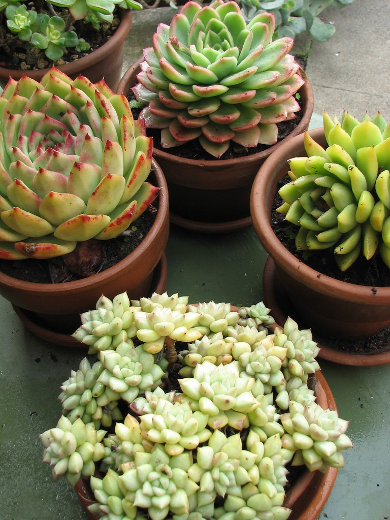 Some of our potted succulent collection we have a for Plante jardin ombre