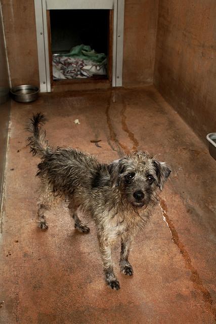 Free Dog Shelter