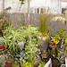 Panorama of a SOMA Garden