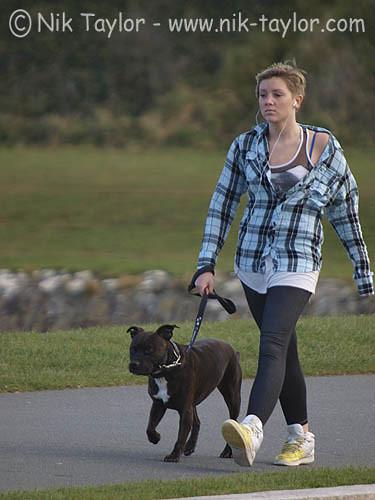 Dog Walking Jobs Cornwall