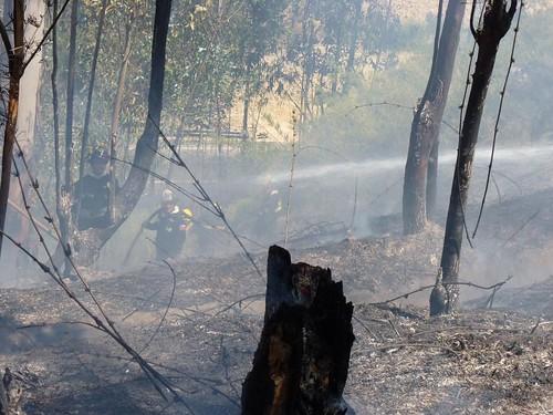 Incendio en el Jardín Botánico Nacional