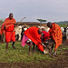 The Maasai tribe - blood from cattle