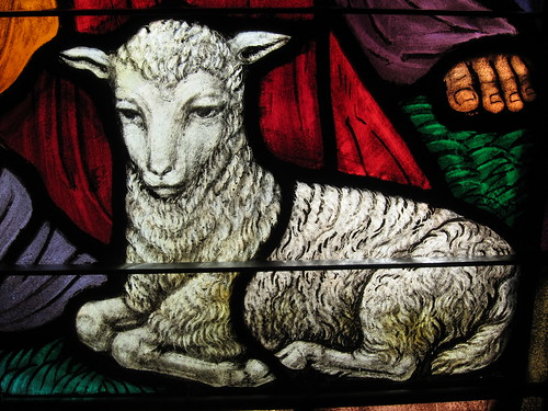"The lamb from ""The Nativity"" 