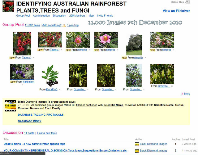Rainforest Plants Names Rainforest Plants