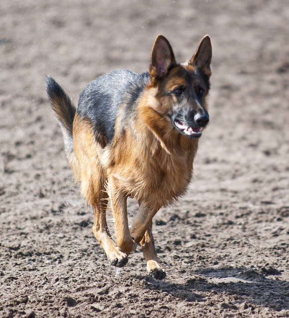 Fleet Peeples Dog Park Hours