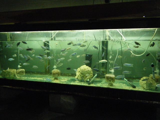 Thumbi West quarantine tank