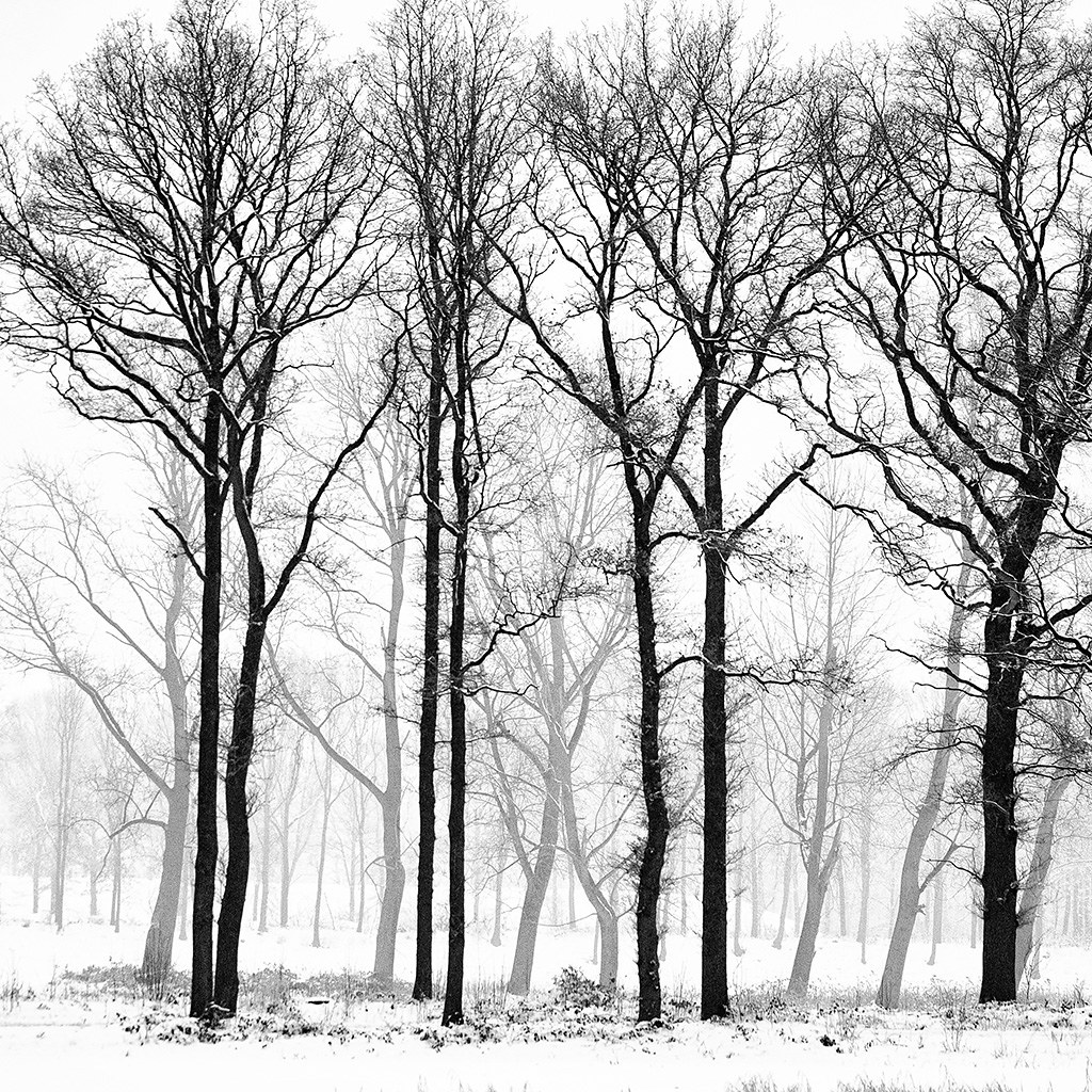 Image result for winter trees