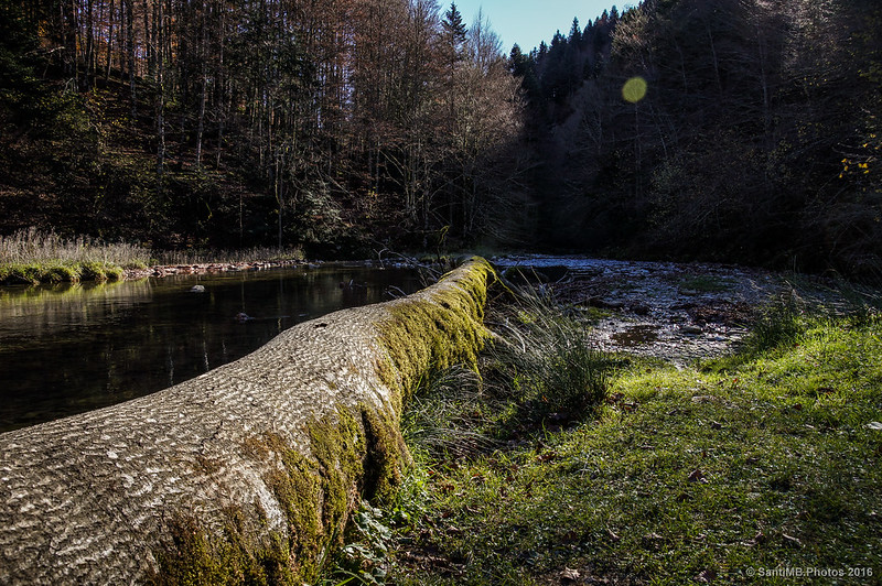 Un claro del río Urbeltza