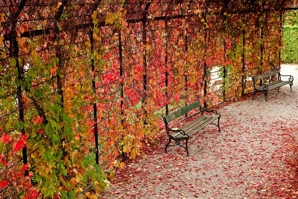 Autumn in sch 246 nbrunn vienna bwv228 flickr