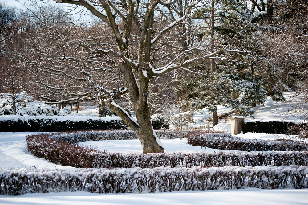 Trees and box hedges at brooklyn botanic garden in winter flickr - Gardening mistakes maintaining garden winter ...