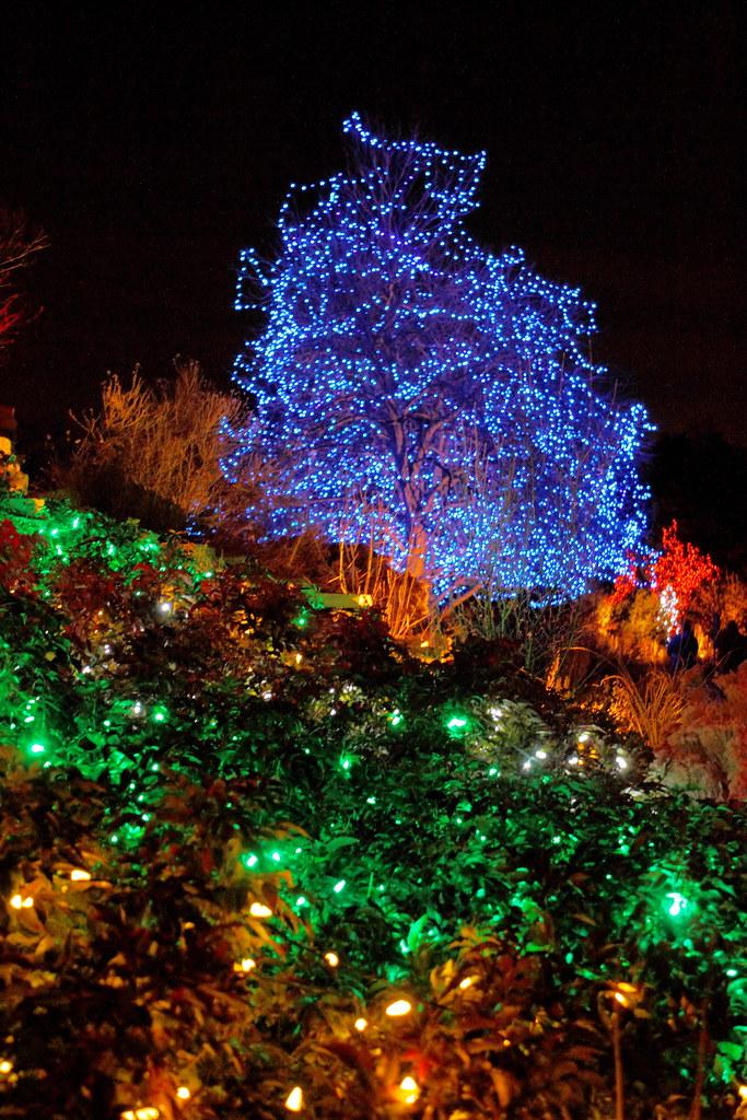 Denver Botanical Garden Christmas Lights The Botanical Gar Flickr