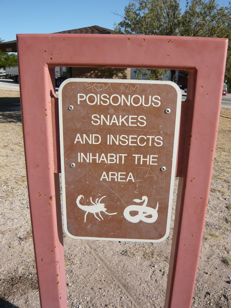 Poisonous snakes and insects inhabit the area | Enjoy your ...