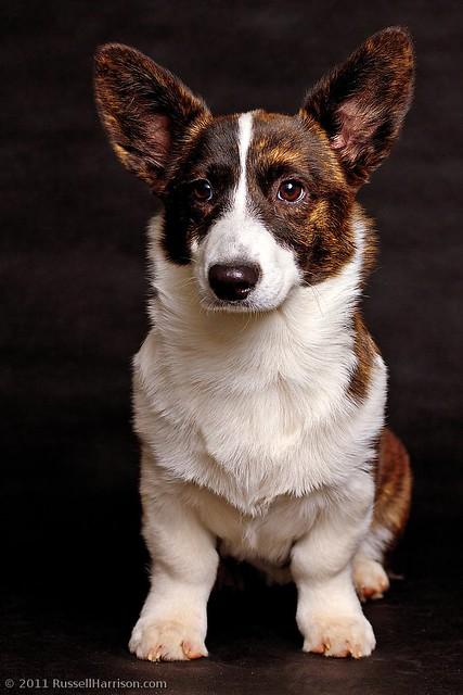 Wake County Dog Rescue