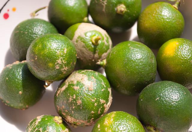 calamansi fruit fruit machine