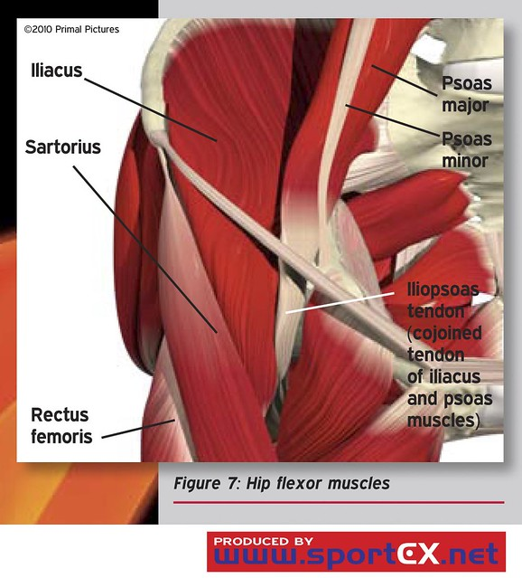 Hip flexor muscles | Flickr - Photo Sharing!