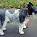 Domino On The Sidewalk, September, 2010