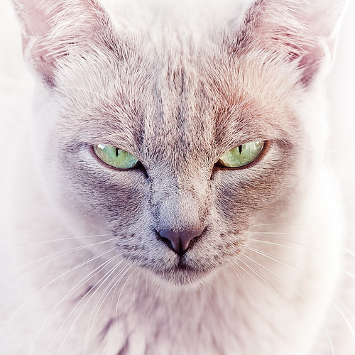 Cat | by ►CubaGallery