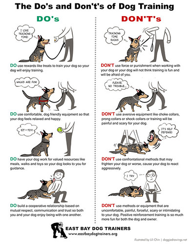 Image Result For Pro Dog Training