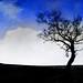 Wicklow Tree (best on Black)