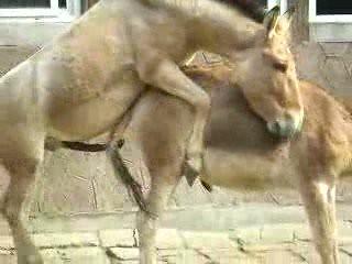 Free equestian sex newsletter