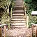 Log Stairway
