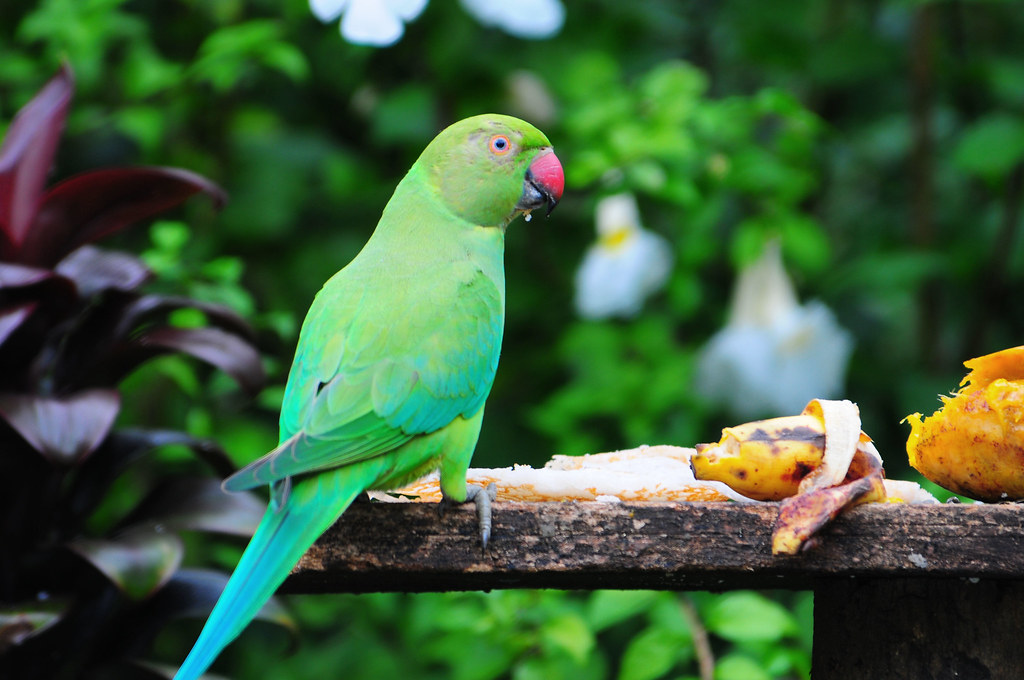 Image result for parrot feeding in home