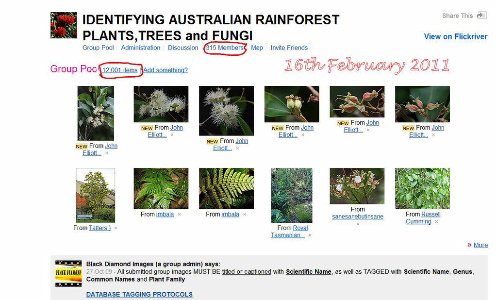 Rainforest Plants Names Rainforest Plants Trees