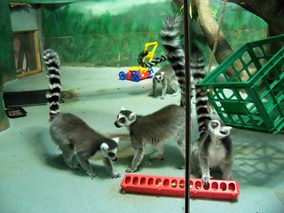 Feeding Time for the Lemurs 3 | by BunnyHugger
