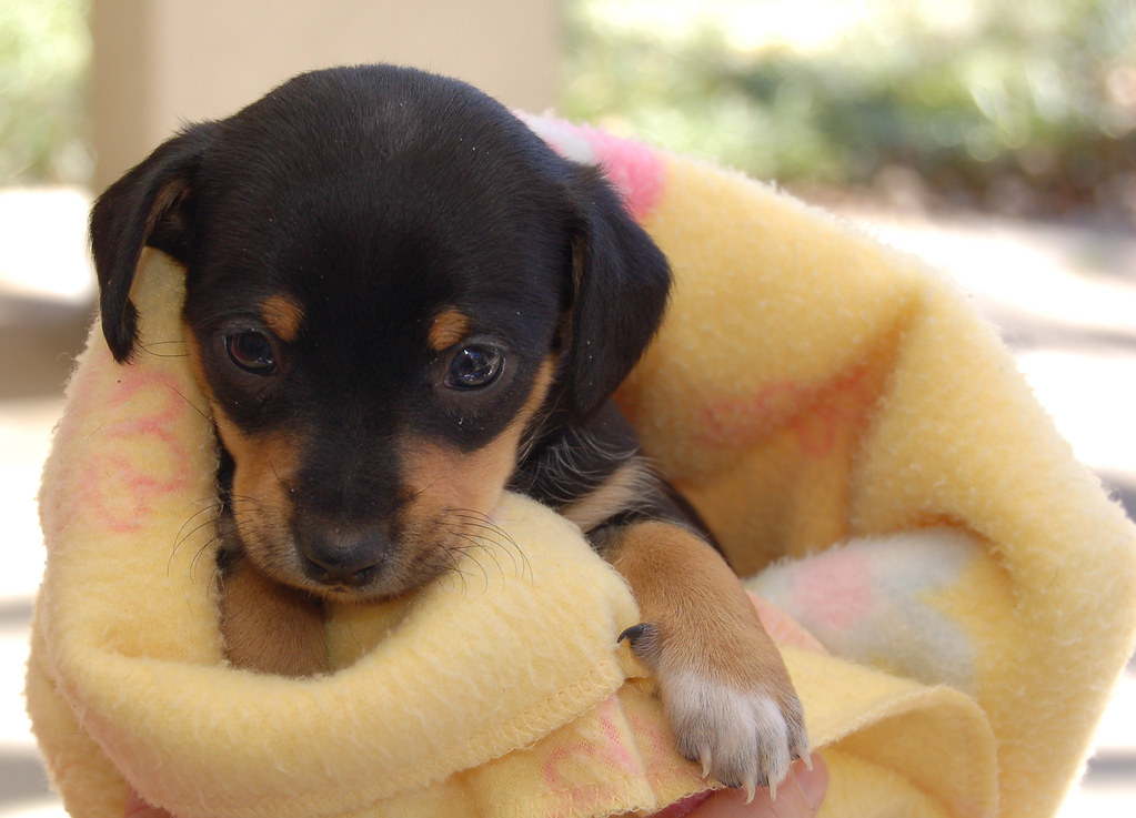 Good Blankets For Dogs