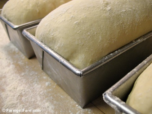 Loaf Pans of Farmhouse White Sandwich Bread ready for the oven | by Farmgirl Susan