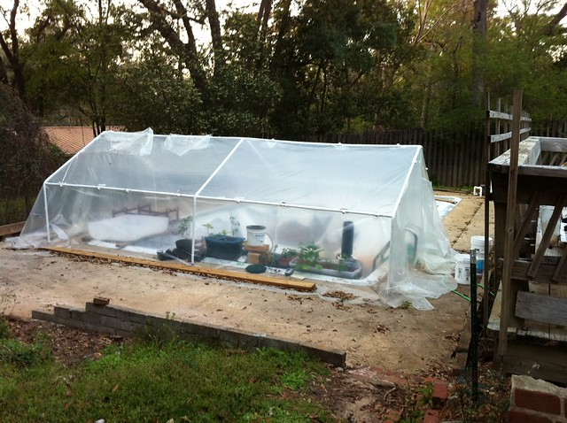 Aquaponics greenhouse in drained swimming pool flickr for Garden pool aquaponics