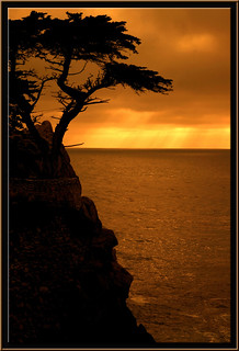 Lone Cypress Sunset | by edpuskas