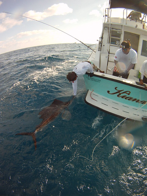 Isla mujeres cancun sportfishing flickr photo sharing for Deep sea fishing cancun