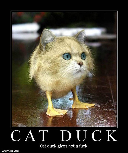 Cat Duck Gives Not A Fuck 15