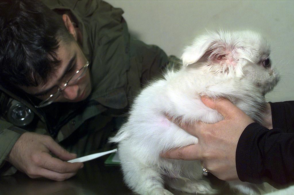 Image Result For Dog Training White