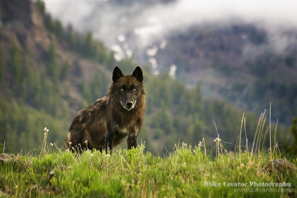 Йеллоустонский национальный парк в сша: описание, фото