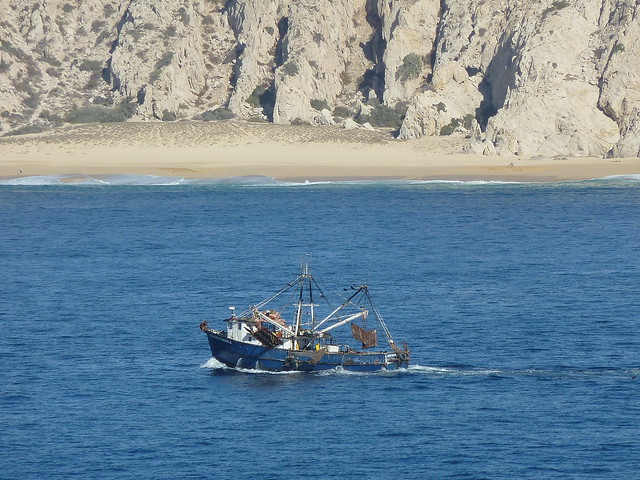 Photo for Fishing cabo san lucas