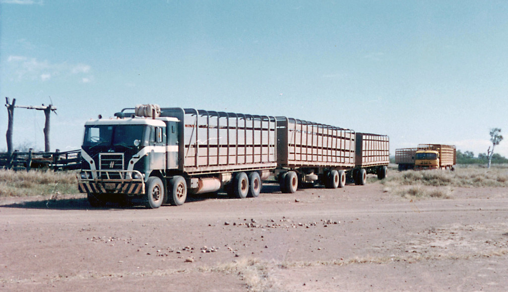 Road Train Loading Cattle At Louisa Downs August 1968
