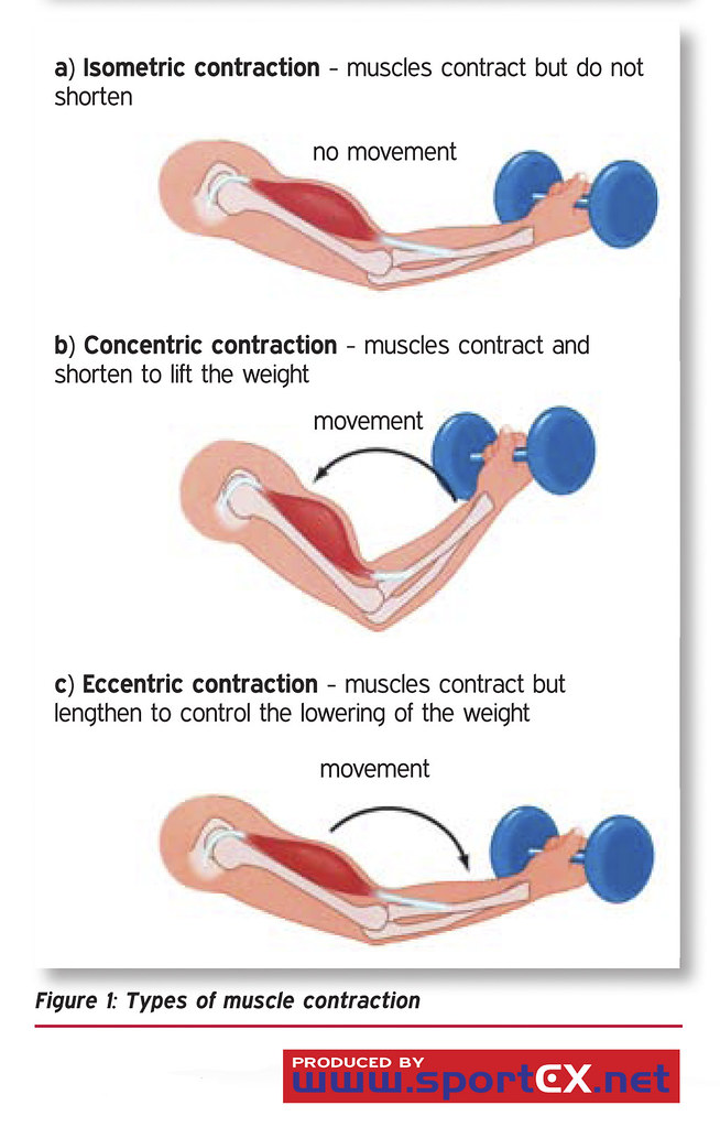 Types of muscle contraction | sportEX dynamics 2010;23(Jan ...