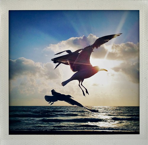 One last seagull before we go... | by Andy Royston / Ft Lauderdale Sun