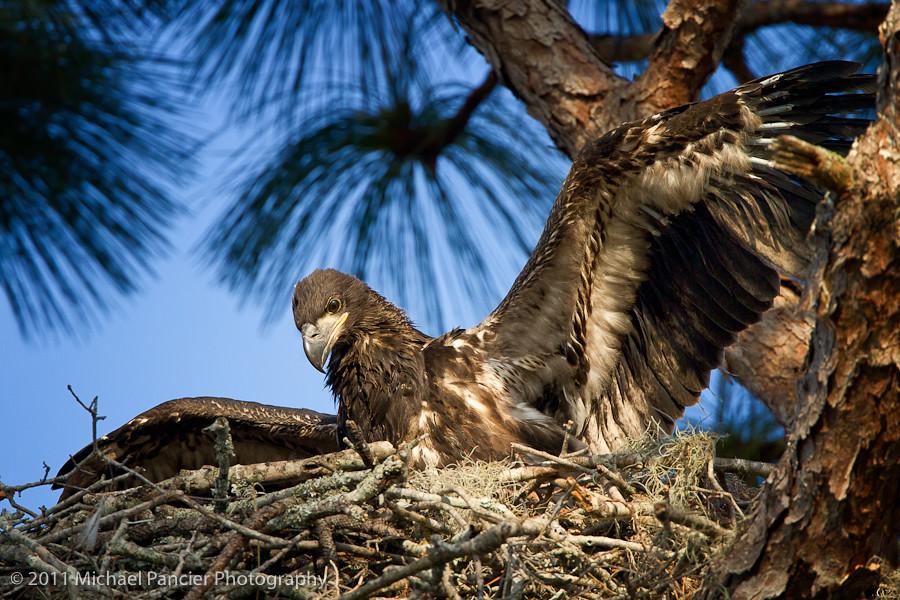 Fly, Eagles Fly lyrics: A short history of the Eagles ...