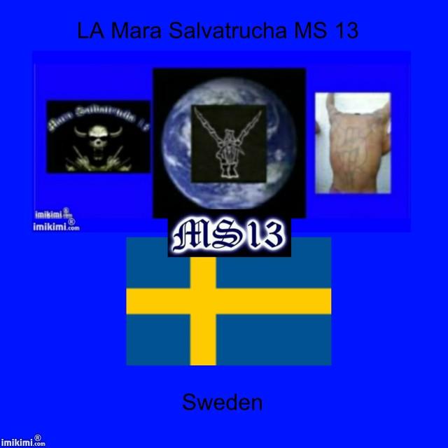 ms13 sverige