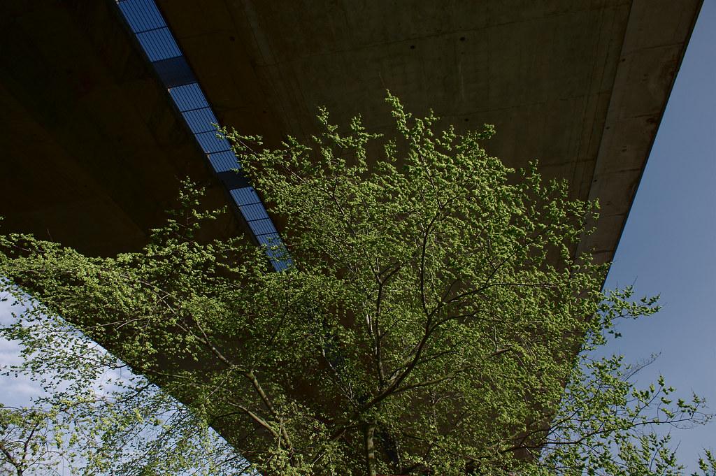 nature vs b ton nature vs b ton un arbre sous le viaduc d flickr. Black Bedroom Furniture Sets. Home Design Ideas