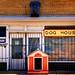 127/365 - Dog House