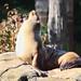 'Sea Lion Sun Bather' (New York,USA)