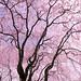 Farewell to the Sakura Season
