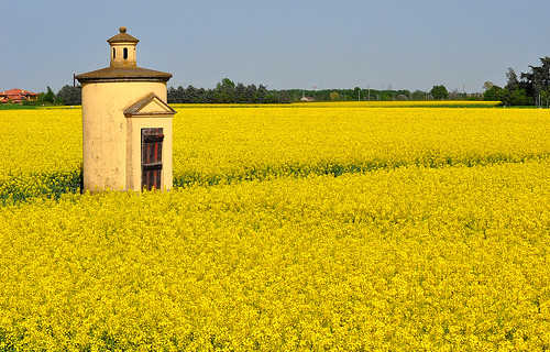 Spring yellow (EXPLORE) | by pierluigi maria