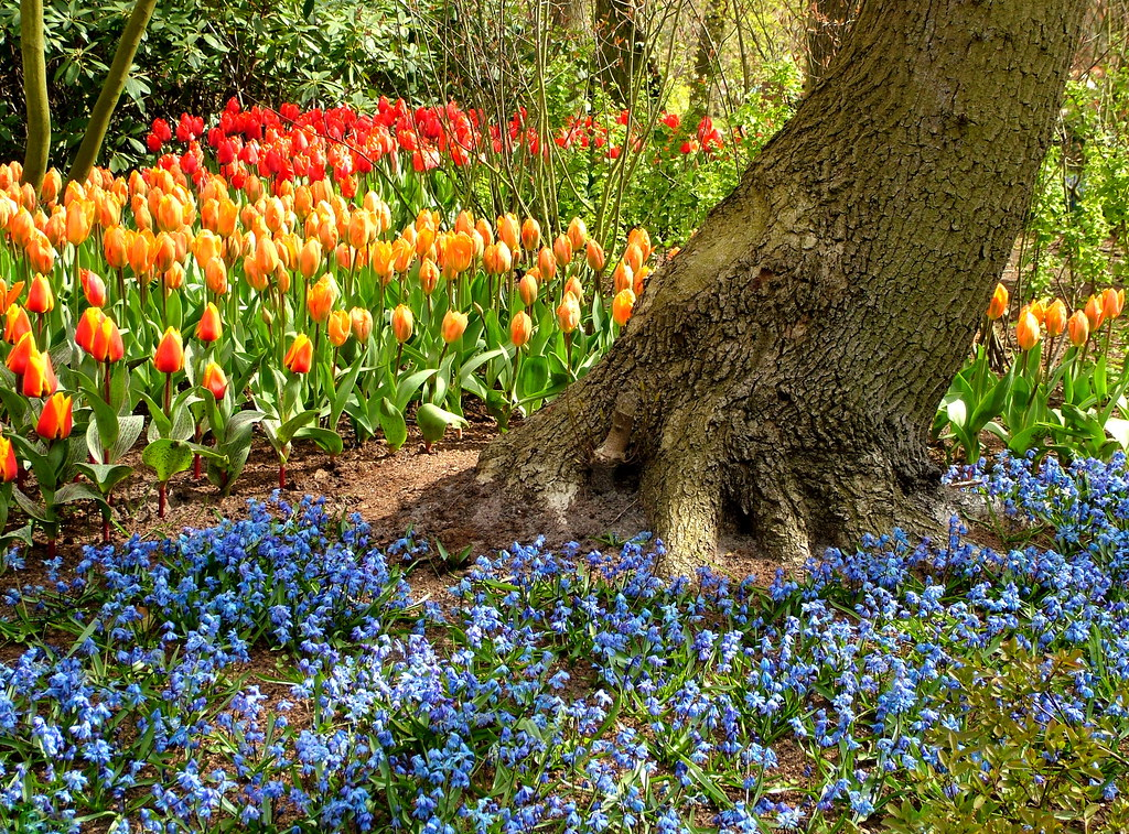 A Carpet of Spring Flowers - Keukenhof Gardens