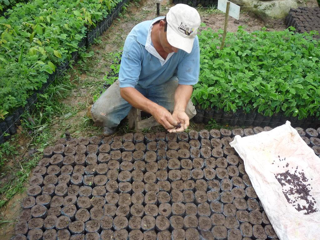 Siembra de semillas vivero mata de cacao 2 rna pauxi pau for Matas de viveros